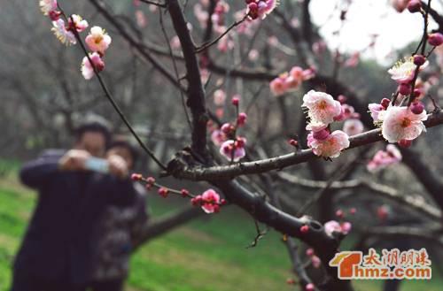 樱花剪纸图注图解步骤.
