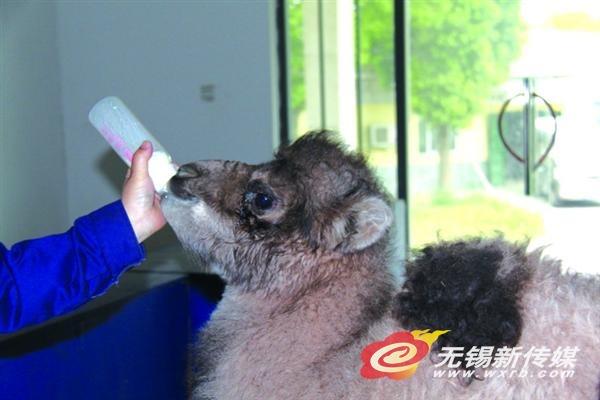无锡动物园众多动物宝宝将与游客见面