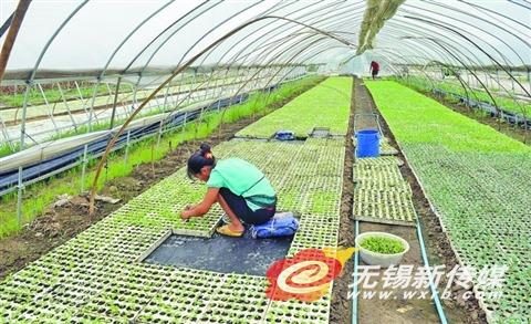 扶持家庭农场 带动农民增收图片