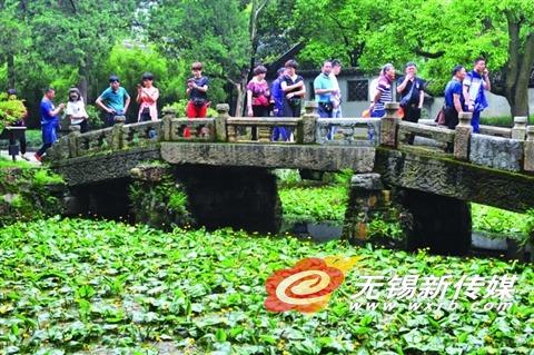 无锡锡惠公园金莲花盛开 吸引众多游客目光