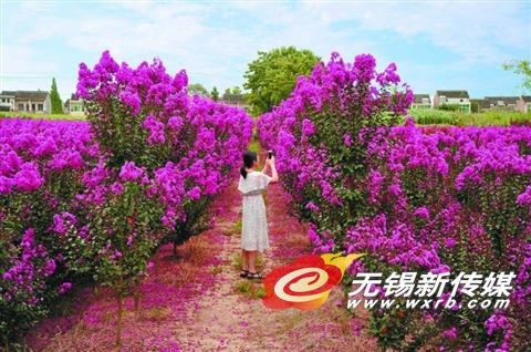 无锡宜兴杨巷镇部分村庄节约用地 花木套栽