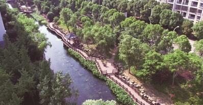 """无锡胡埭镇打造""""水下森林"""" 进一步提升水质"""